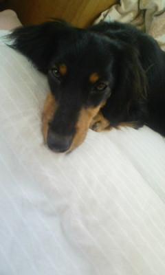 お姉ちゃんのベッドにて
