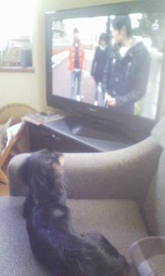 テレビを見る快