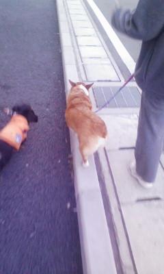 お散歩(^O^)