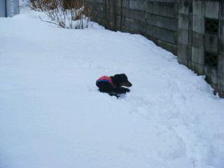 白い雪の中に黒い犬が一匹